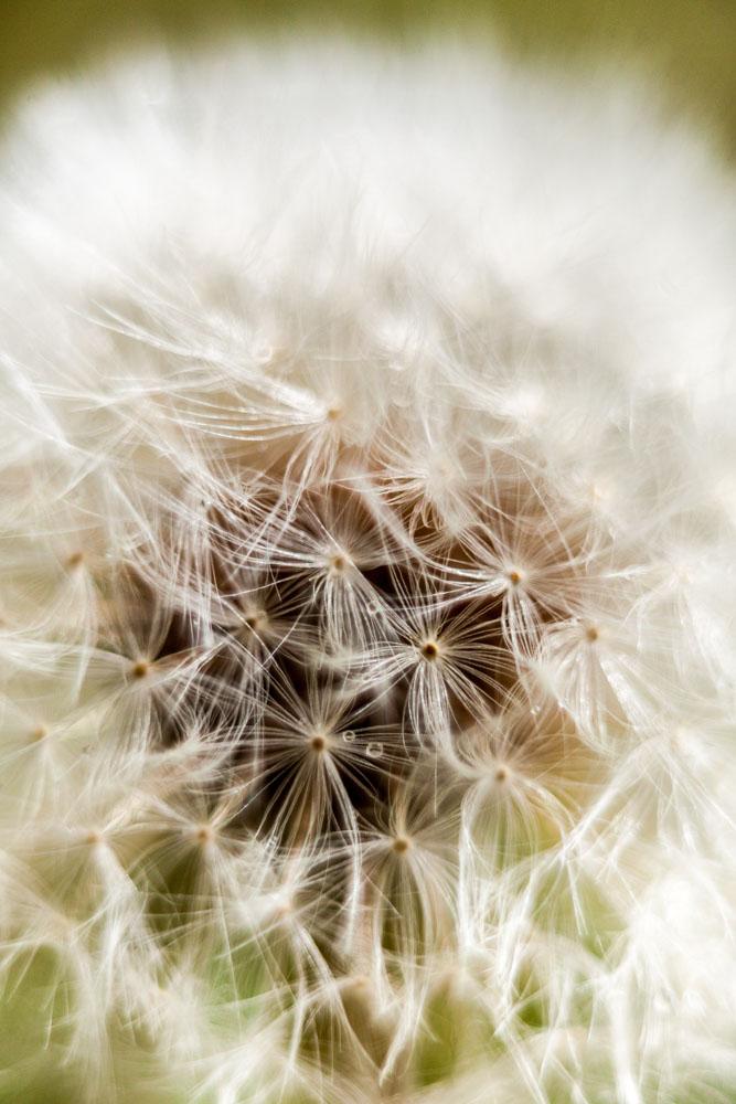 Curso de Fotografía de Natureza
